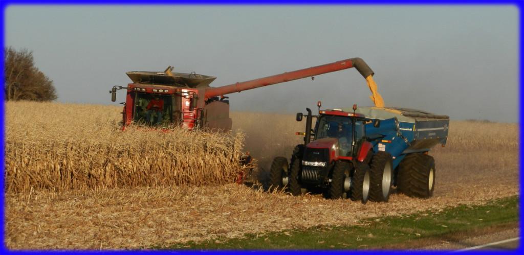 Corn 2011